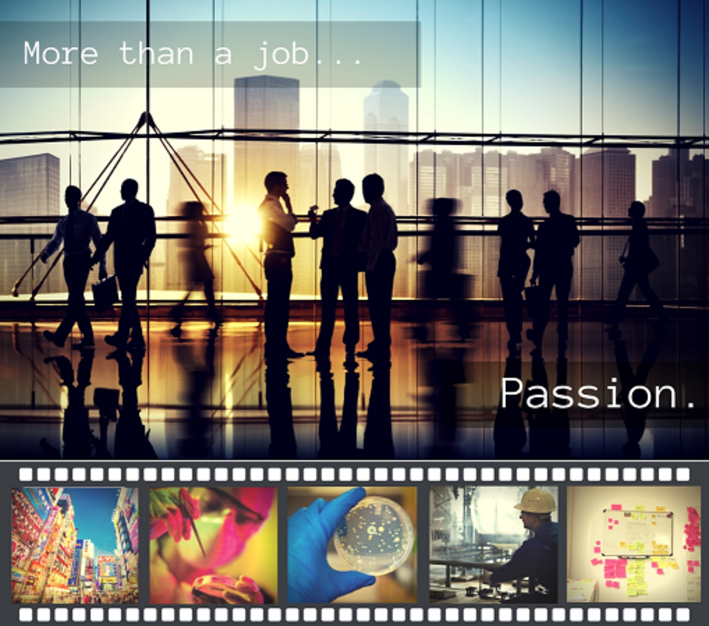 More Than A Job V1