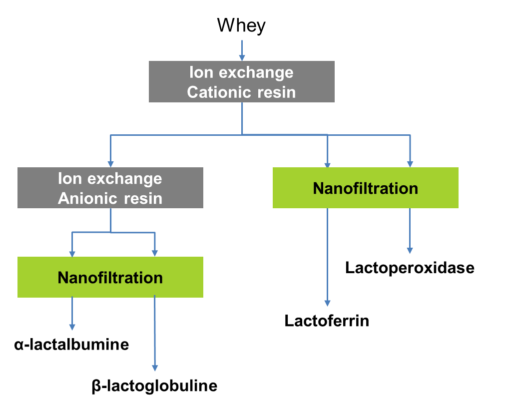production of high value proteins from whey and milk industrial