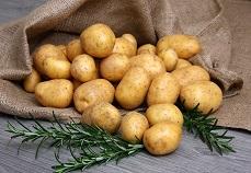 Novasep industrializes potato protein purification unit for Solanic B.V.